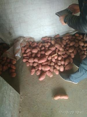 河北张家口荷兰14土豆 2两以上