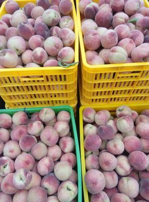 陕西西安长安区沙红桃 90mm以上 5两以上