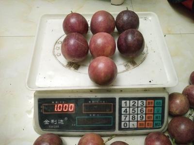 广西南宁紫香一号百香果 80 - 90克
