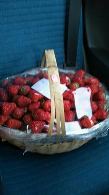 浙江杭州红颜草莓 20克以上