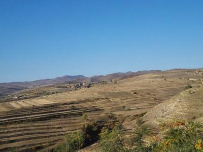 内蒙古赤峰普通荞麦
