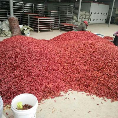 这是一张关于艳红辣椒 5~10cm 特辣的产品图片