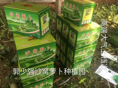 天津沙窝萝卜 1.5~2斤
