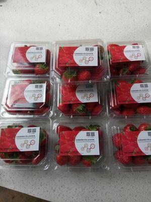 云南省曲靖市麒麟区波特拉草莓 30克以上