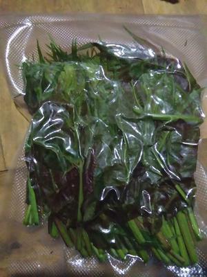四川自贡红香椿