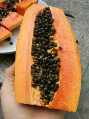 广西北海红心木瓜 1.5 - 2斤
