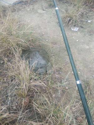 海南儋州黄沙鳖