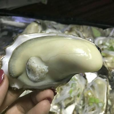 乳山牡蛎 三倍体,现捞现发,顺丰空运,每只2-3两,5斤一件
