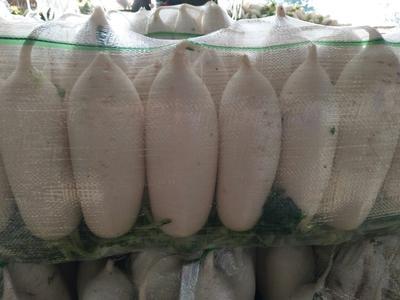 湖北天门白萝卜 1.5~2斤