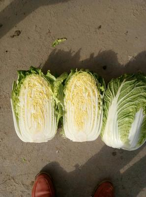 河南省南阳市邓州市韩国黄心白菜 3~6斤 净菜