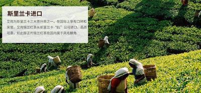 福建厦门锡兰红茶 散装