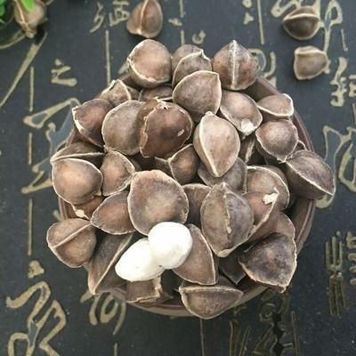 青海西宁辣木籽