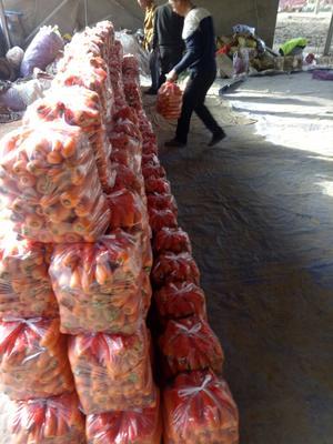 河南开封三红胡萝卜 15cm以上 2两以上 3~4cm