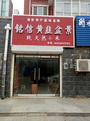 河北省邢台市南宫市黄韭 头茬 20cm以下