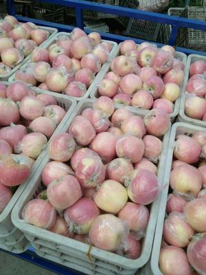 这是一张关于红富士苹果 膜袋 条红 75mm以上 苹果 红富士苹果 山东苹果的产品图片