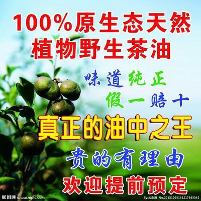 湖南衡阳野生山茶油