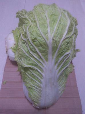 内蒙古自治区呼伦贝尔市扎兰屯市东北大矮白菜 3~6斤 毛菜