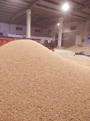 安徽蚌埠黄黄豆 生大豆 2等品 目前是经过筛选的精品!没有坏的霉的