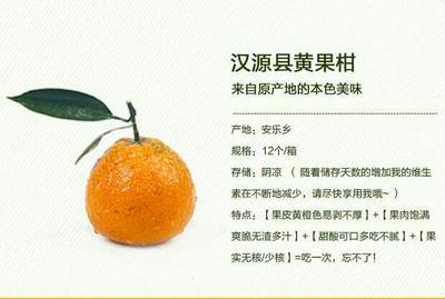 四川雅安黄果柑 5 - 5.5cm 3两以上
