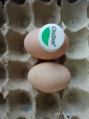 这是一张关于土鸡蛋 食用 简包装的产品图片