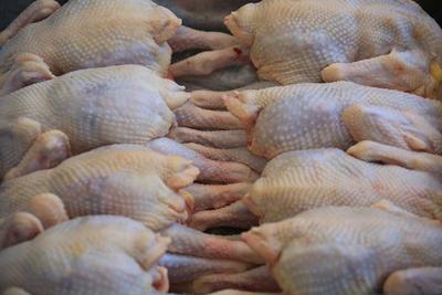 内蒙古赤峰鸡肉类 直腿鸡10.5kg11kg价格电话详询