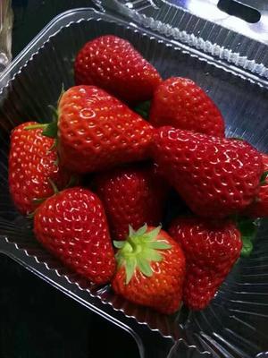 河北承德红颜草莓 30克以上