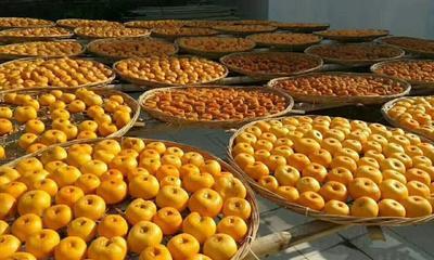 这是一张关于恭城柿饼 箱装的产品图片