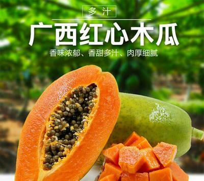 广西南宁红心木瓜 1 - 1.5斤 8斤泡沫箱装包邮
