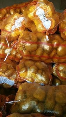 甘肃定西中号土豆 2~4两