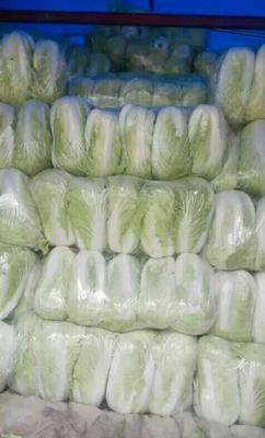 河南省商丘市夏邑县87-114白菜 6~10斤 净菜
