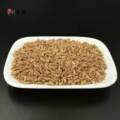 安徽亳州谷芽 优质浮小麦