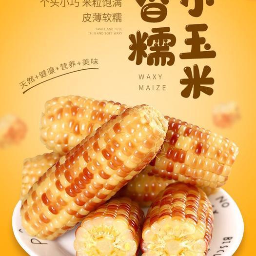 西双版纳香糯玉米 即食真空包装  4-8斤装 早餐辅食减肥餐