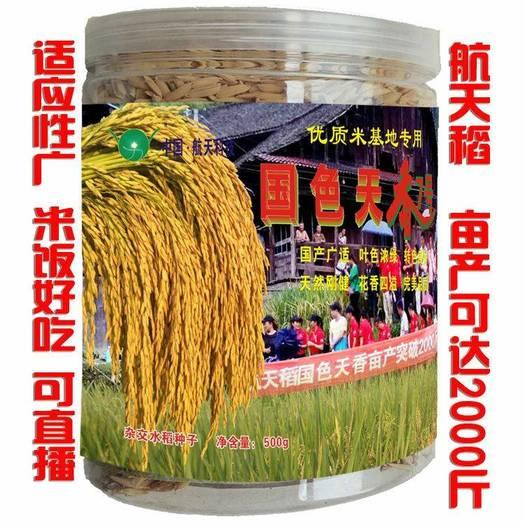 科辐梗9号水稻种子  航天稻中国泰米高产2000斤杂交水稻种子香稻稻谷
