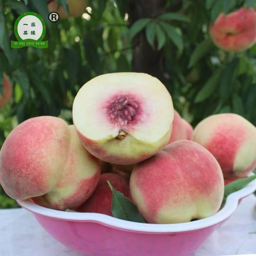 现摘现发红冬桃中油21脆甜爽口黄桃油桃产地直供大红毛桃