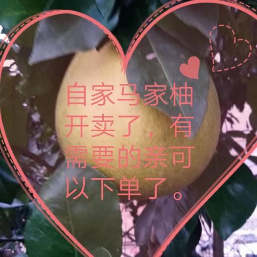 柚子  上海世博会参展柚红心马家柚