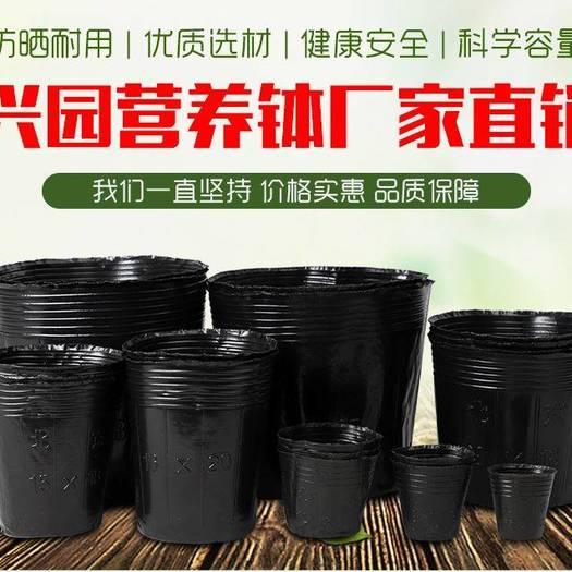 营养钵/营养杯  各种型号营养钵生产销售中