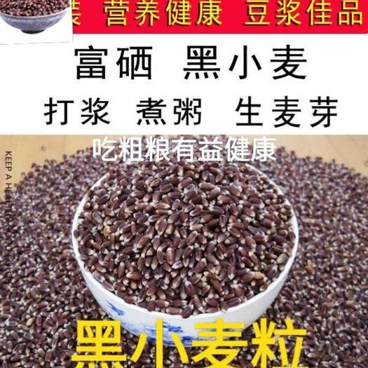 黑麥  黑小麥逢黑必補好粗糧有益健康健康5斤一袋包郵