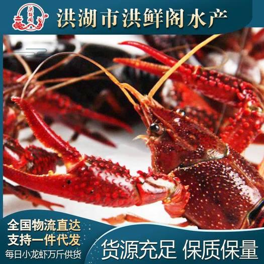 洪湖市精品清水小龙虾,规格齐全,底板干净,肉质饱满