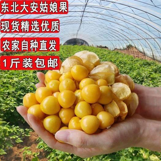 東北特產黃姑娘果甜菇娘果農家自種新鮮當季水果洋姑娘果燈籠果