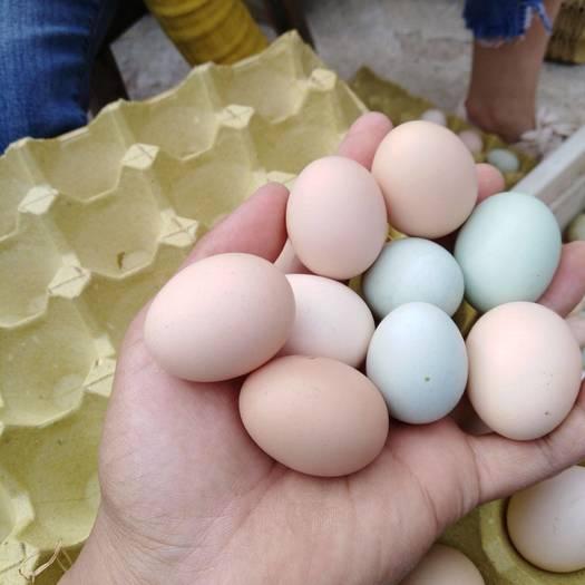 新鮮散養初生蛋!小雞蛋!