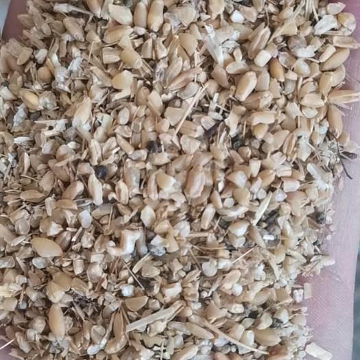 白麦  碎小麦下脚料 常年出售各种饲料原料