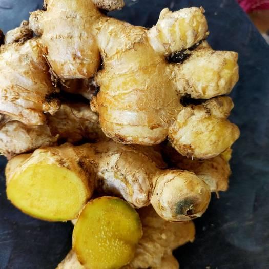 云南小黄姜新鲜蔬菜现挖新鲜深山生姜月子姜土姜嫩姜干姜