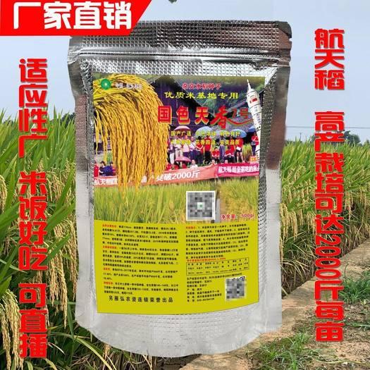 国色天香  航天稻中国泰米高产2000斤杂交水稻种子 香稻 稻谷