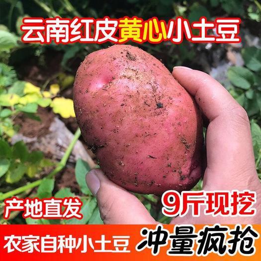 青薯9号  2021年云南红皮小土豆 农户直发 一件代发整车发