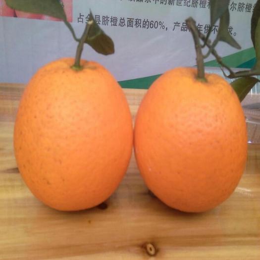 纽荷尔脐橙  最美乡村果飘香,武胜脐橙诱您尝!