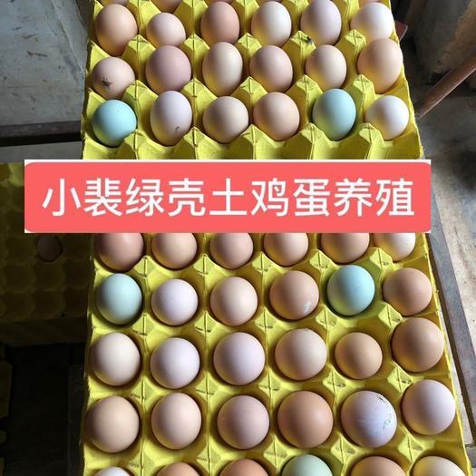 初生蛋  湖北助农鸡场直发绿壳土鸡蛋破损包赔