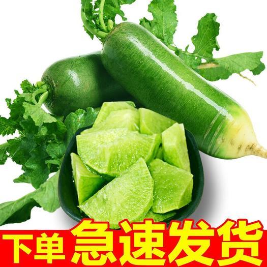 【亏本冲量包邮】正宗绿皮沙窝萝卜水果萝卜新鲜萝卜甜脆青萝卜批