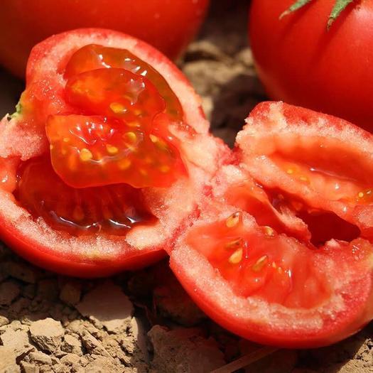 沙漠西红柿5斤装包邮新鲜番茄