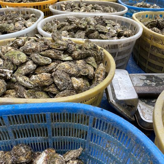 广东生蚝鲜活汫洲蚝肉烧烤蚝特大牡蛎海鲜水产高压锅蚝头汫洲
