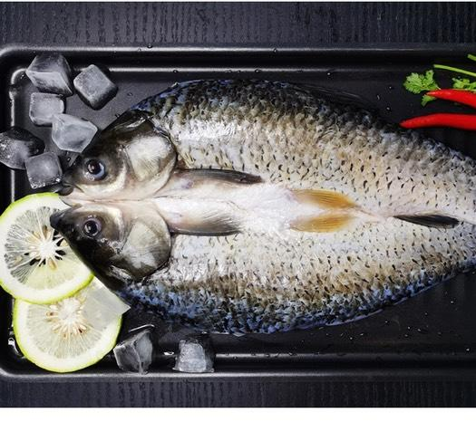 池塘草鱼  开背草鱼鲩鱼大小草鱼鲩鱼鲜活开背珠海斗门鲩鱼烤鱼开背鱼